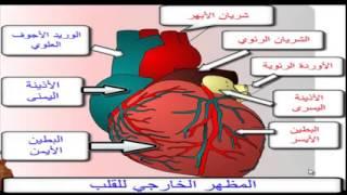 درس القلب