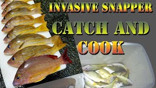 Hawaiian Style Catch And Cook - Fishing For Invasive Snapper!  - Taape, Ulua, Wrasse, Food - BODS 32
