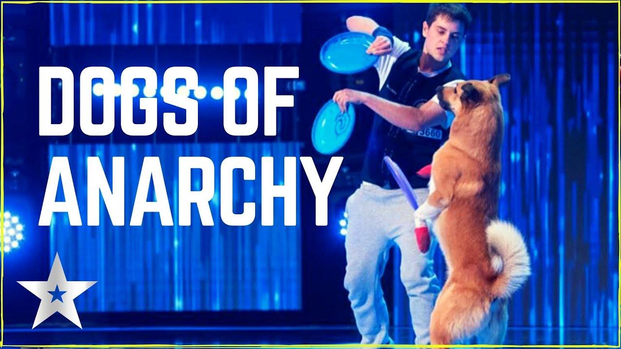 EXCEPŢIONAL! Dogs Of Anarchy | Câinele, adevăratul prieten al omului! Românii au Talent!