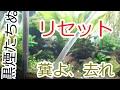 掃除とリセット! 36cm水槽 の動画、YouTube動画。