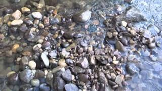 Gold Prospecting on Tuscarawas river Ohio  S3:E8