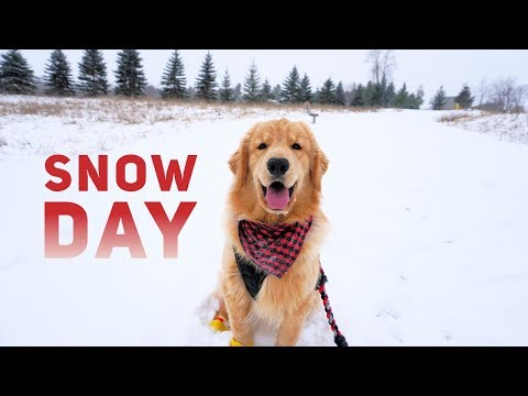 Tucker Has a Snow Day VLOG