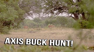 Just The Hunt- SemiLive Hunting- Axis Buck Hunt