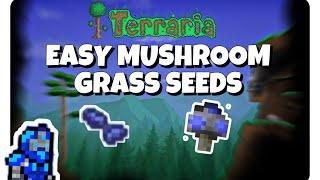 How to easily get mushroom grass seeds!   Terraria Tutorial!