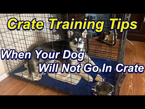 How To Crate Train A Dog That Will Not Go Into Crate