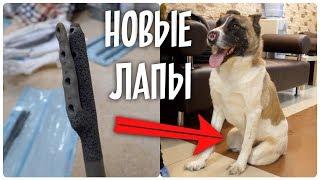 Новые лапы для бездомной собаки. Подготовка к операции.