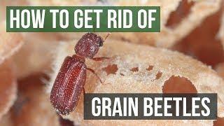 How to Get Rid of Grain Beetles (4 Easy Steps)