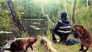 Рыбалка на диком озере БОБРА ловля на махувую удочку