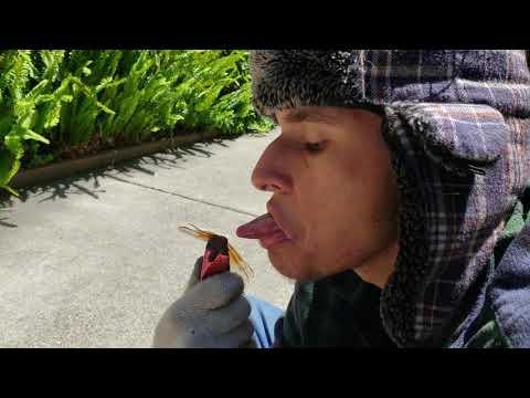 MAN KISSES MOTHER NATURE'