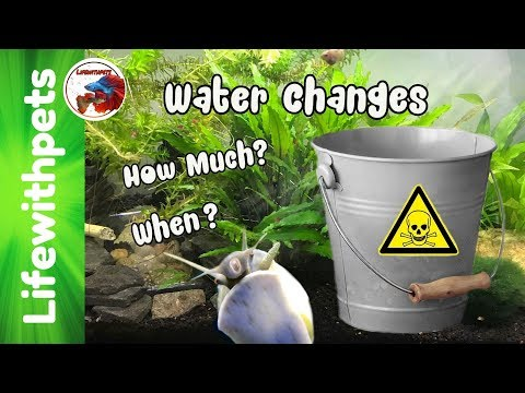 When And Why Do Water Changes On A Fish Tank