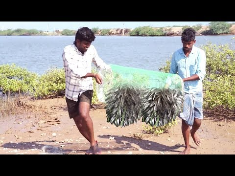 How to Make A Simple Fish Trap    BEST FISH TRAP