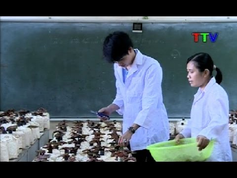 Khoa Nông lâm Ngư nghiệp Trường Đại học Hồng Đức trồng thành công Nấm Linh chi cho năng suất cao.