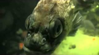 Best Underwater Digital Cameras, Marine Cameras - Ocean Systems, Inc