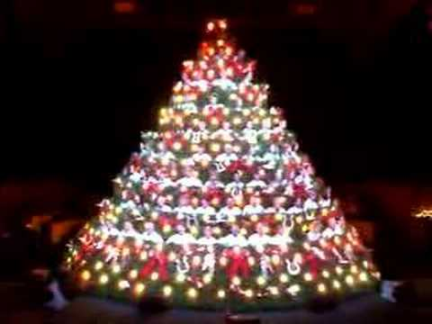 Living Christmas Tree The Light - YouTube