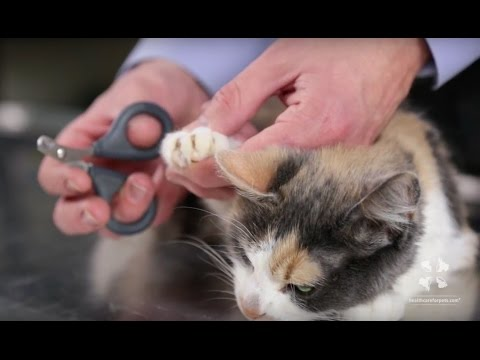 How To Safely Trim A Cat's Nails   Vet Tutorial