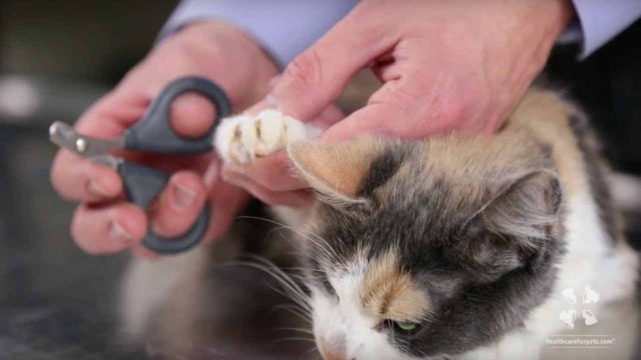 Vet Tutorial | How to Safely Trim a Cat\'s Nails - YouTube