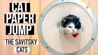 Cat paper jump || Cat Tricks ||Funny Cat Videos || The Savitsky Cats