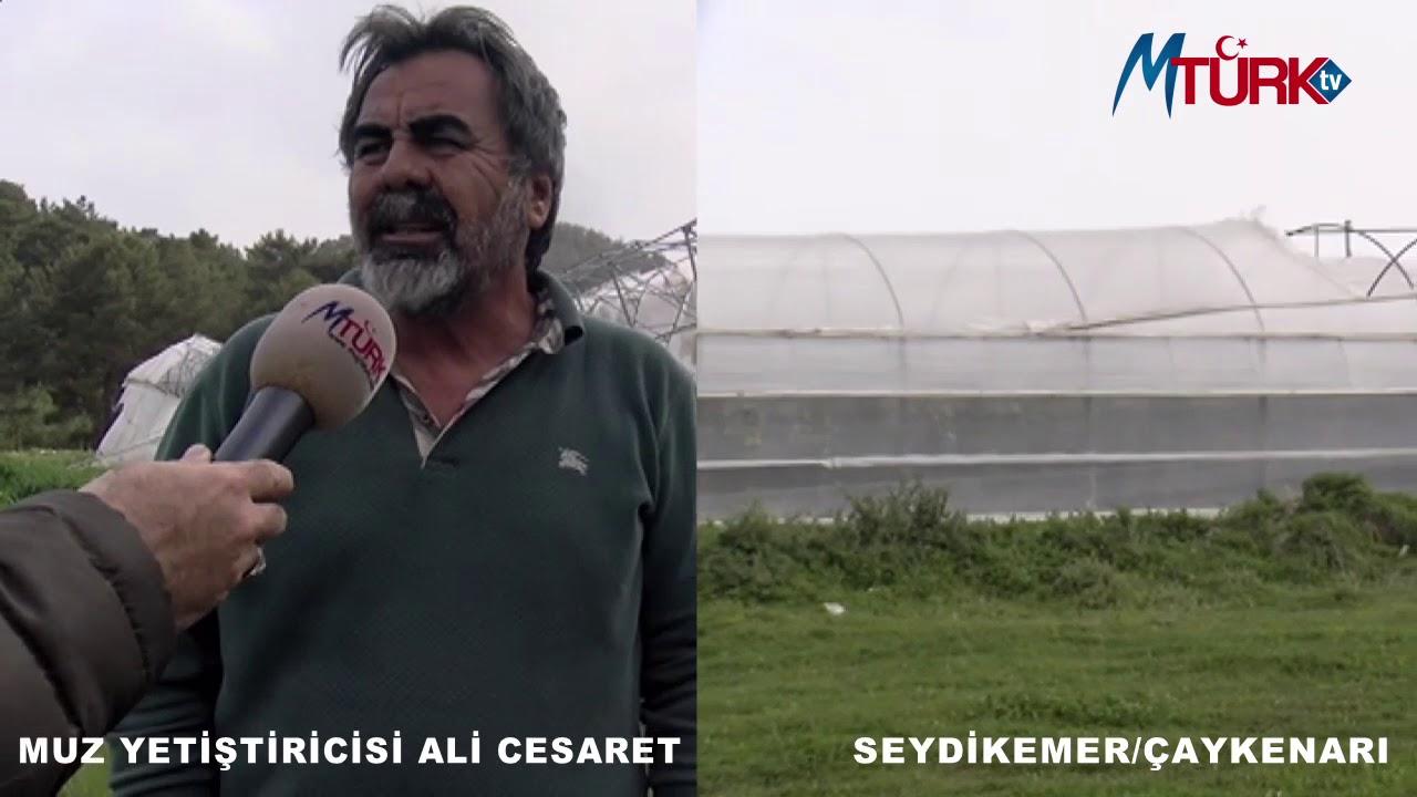 Muz yetiştiricisi ALİ CESARET MUĞLATÜRK TV Mikrafonuna konuştu.