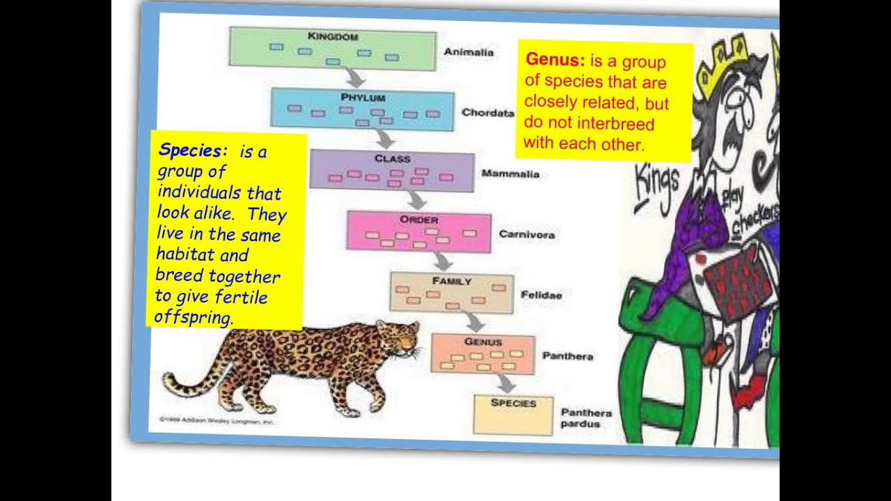IGCSE Biology Chap 1-2 Classification - YouTube
