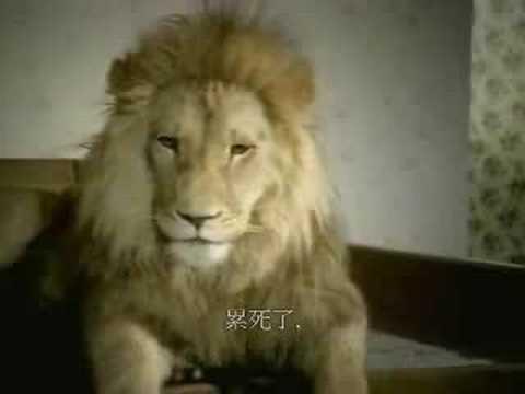 獅子你慘了...