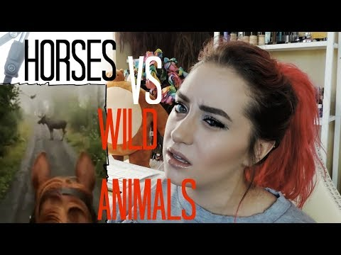 Horse VS Moose, IDIOTS Chase Horse On Scooter + MORE - Raleigh Reacts