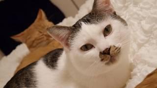 それ…私のベッドなんですが…。我が物顔で飼い主のベッドを独占する猫たち