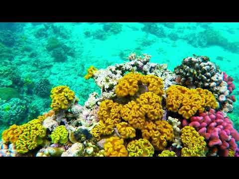Mystery Island (Inyeug), Vanuatu