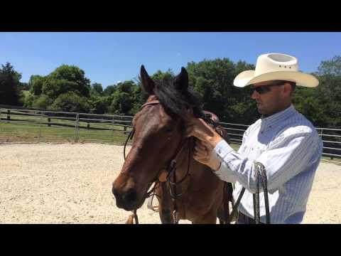 Horse Training - First Ride, First Mount, Difficult Horse
