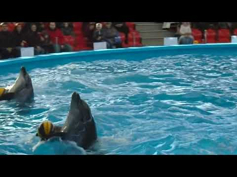 Сочи Парк. Дельфинарий. (4 января 2020 г.)