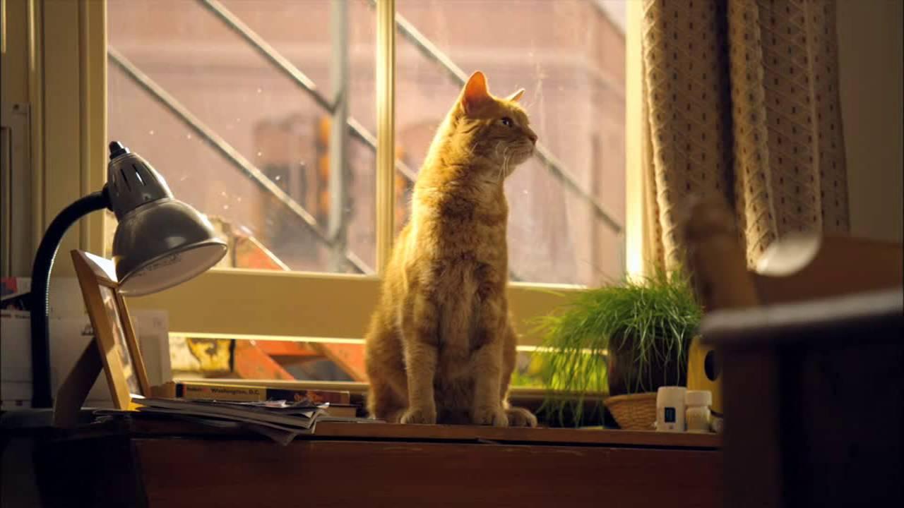 Можно ли оставить одного кота дома на неделю