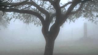 """El árbol de los problemas """"Historias para Reflexionar"""""""