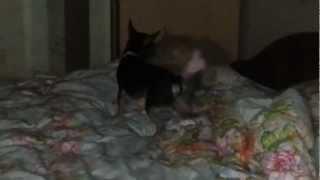 Кошки против собак 2