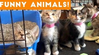 Funniest Pets & Animals of the Week Compilation December 2018 | Funny