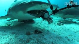 Страшные Зубы Белой Акулы