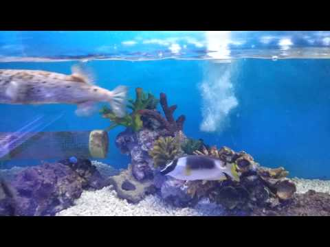 Marine fish shop tour (London)