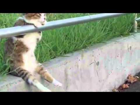 [ Cat sitting relaxed/ 夕暮れの お座り猫ちゃん ] Cat+1 Channel