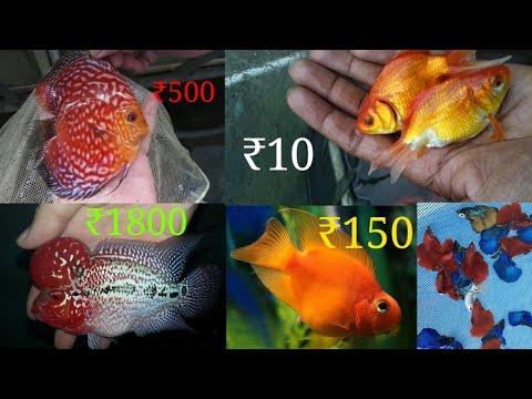 Fresh Water Fish Price List