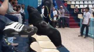 Nemo the Sea Lion and Dolphin show - Fantasy Land, Riyadh-Saudi Arabia