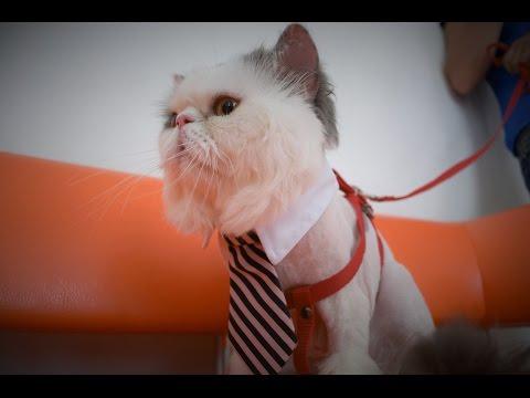 Мариупольская радиогруппа и ветеринарная клиника Динго поздравляют всех с Всемирным днем кошек