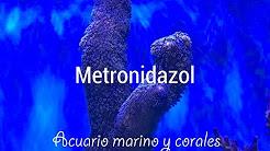 Metronidazol: cómo tratar parásitos intestinales