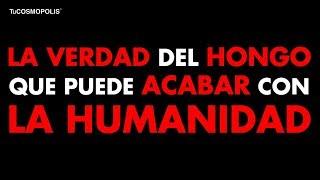 La VERDAD del HONGO que se ACABA de DESCUBRIR y PUEDE ACABAR con la HUMANIDAD