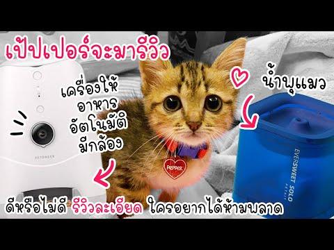 รีวิวน้ำพุแมว & เครื่องให้อาหารแมวอัตโนมัติ ของแมวน้อยเป้ปเปอร์ !! รีวิวละเอียด !!
