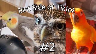 Bird Side Of TikTok #2