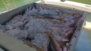 Amazing day fishing for yellowtail, 1300 pounds...