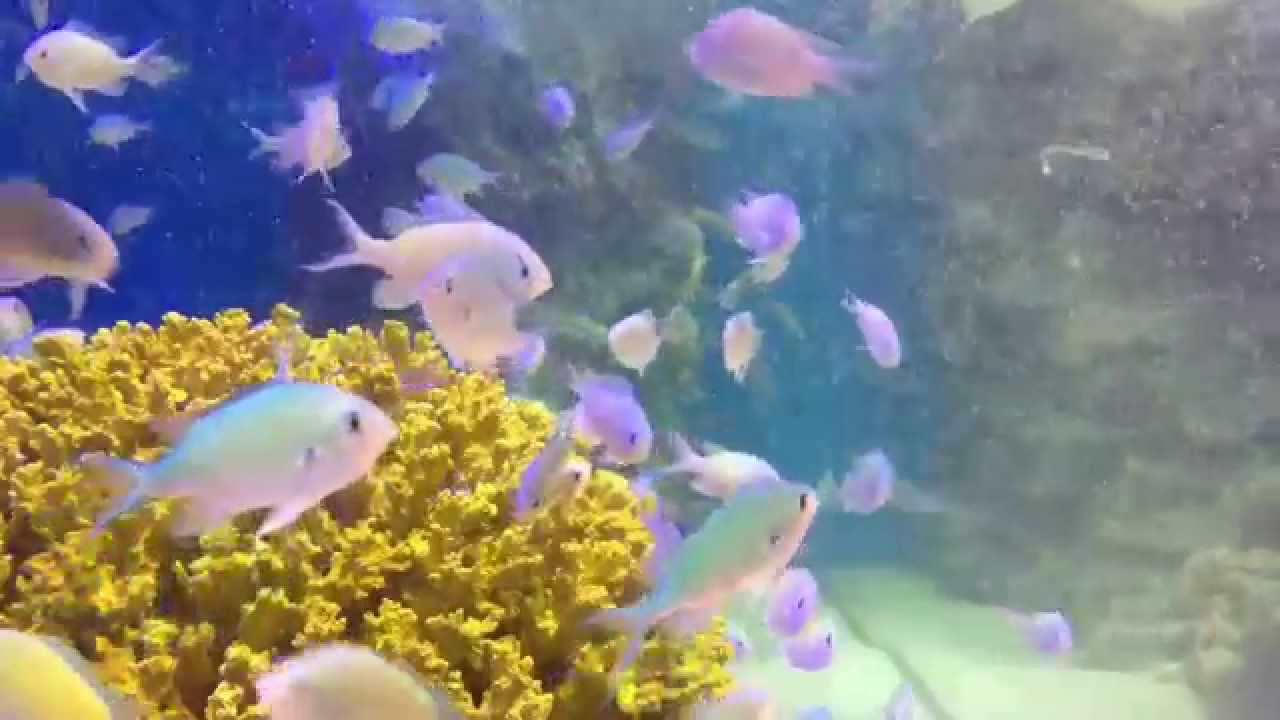 Part of your world the little mermaid a fish tank youtube for Fish tank mermaid