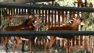 В мире черной антилопы. Забавные животные.