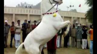 dancing horse.mp4