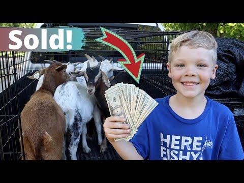 Houston Sold My Goats!