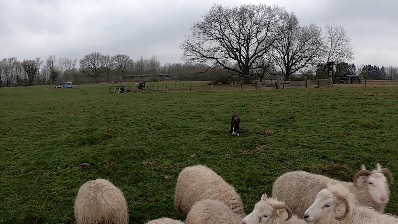 Our last herding training