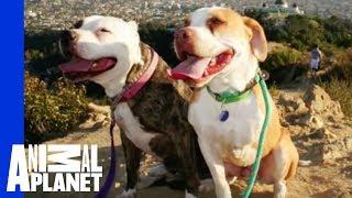Sean, Naja & Leggo Are Loving Life   Pit Bulls and Parolees